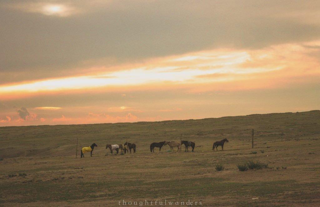 Mongolian horses sunset