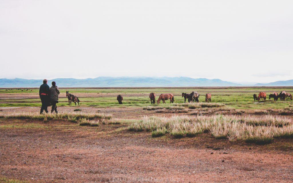 Mongolian couple walking towards horses