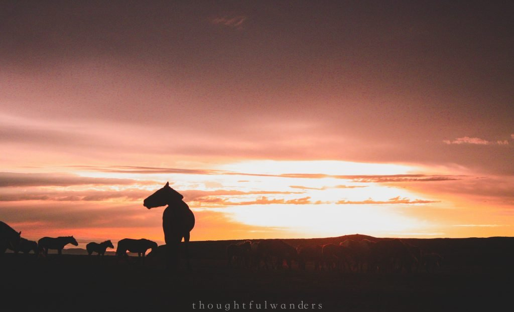 Horse silhouettes at sunset Mongolia