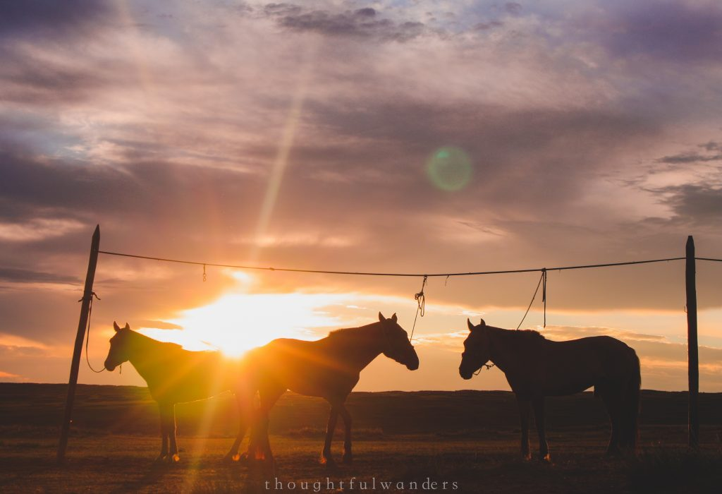 Horses ready to rest for the evening