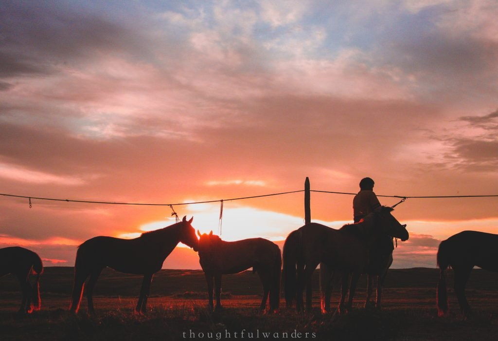 Horse silhouettes with owner at sunset
