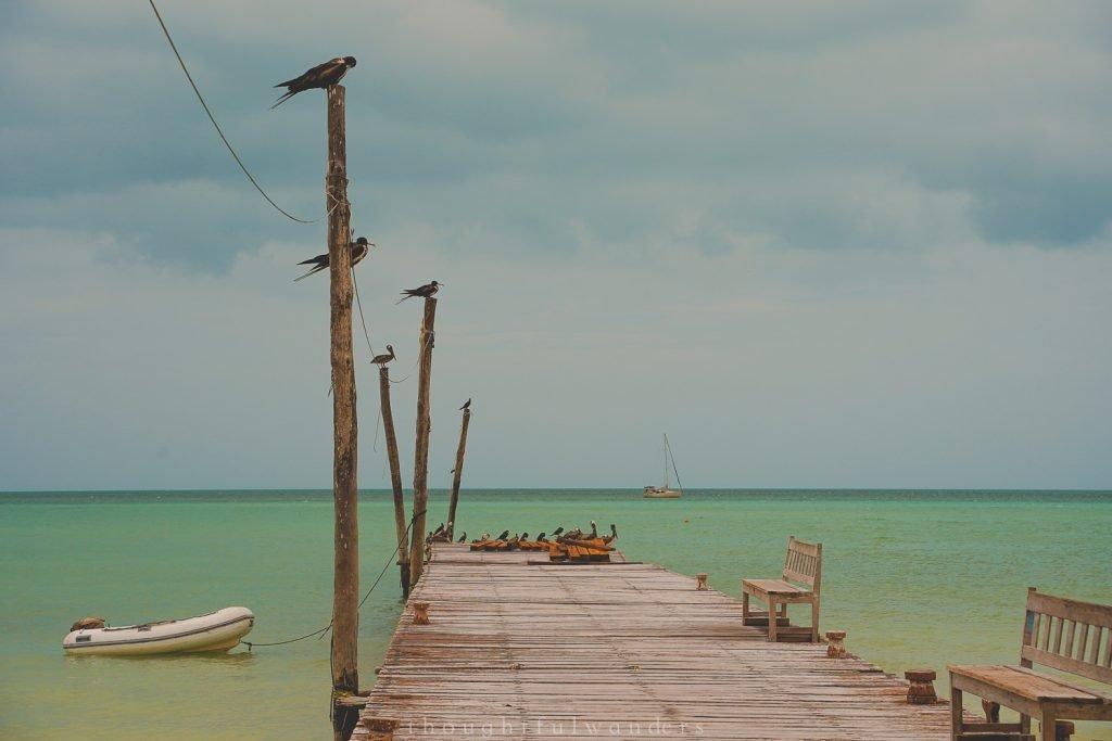 Isla Holbox birds
