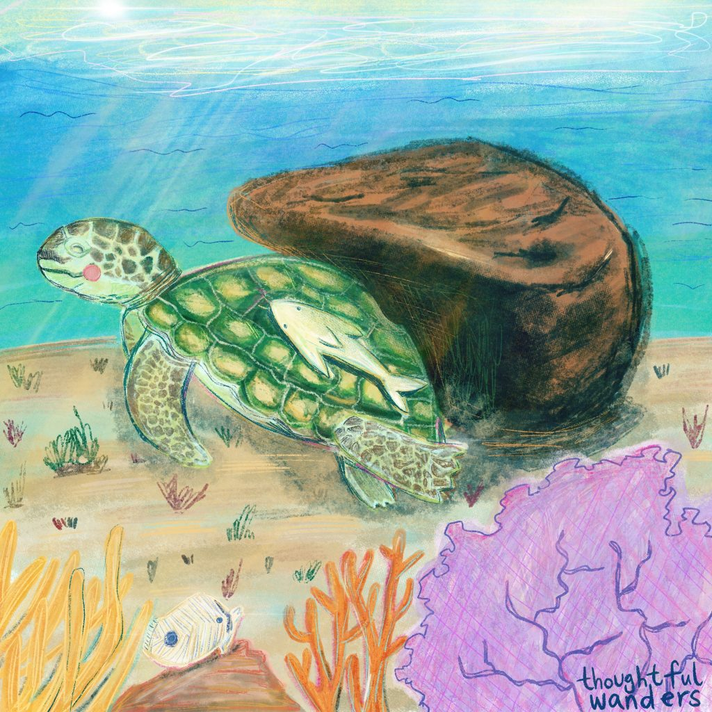 Thoughtful Wanders Art by lydia chu of sea turtle scratching it's back by the rock