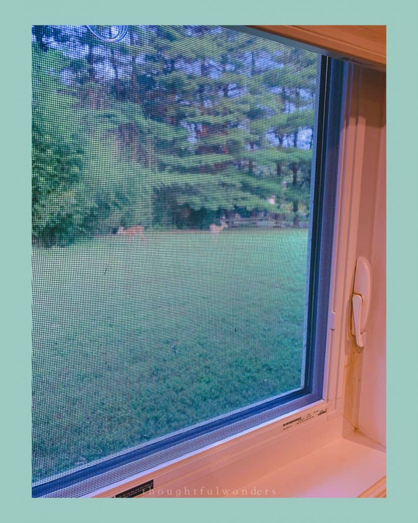 Looking through a window with a mosquito net, see two deer in the distance