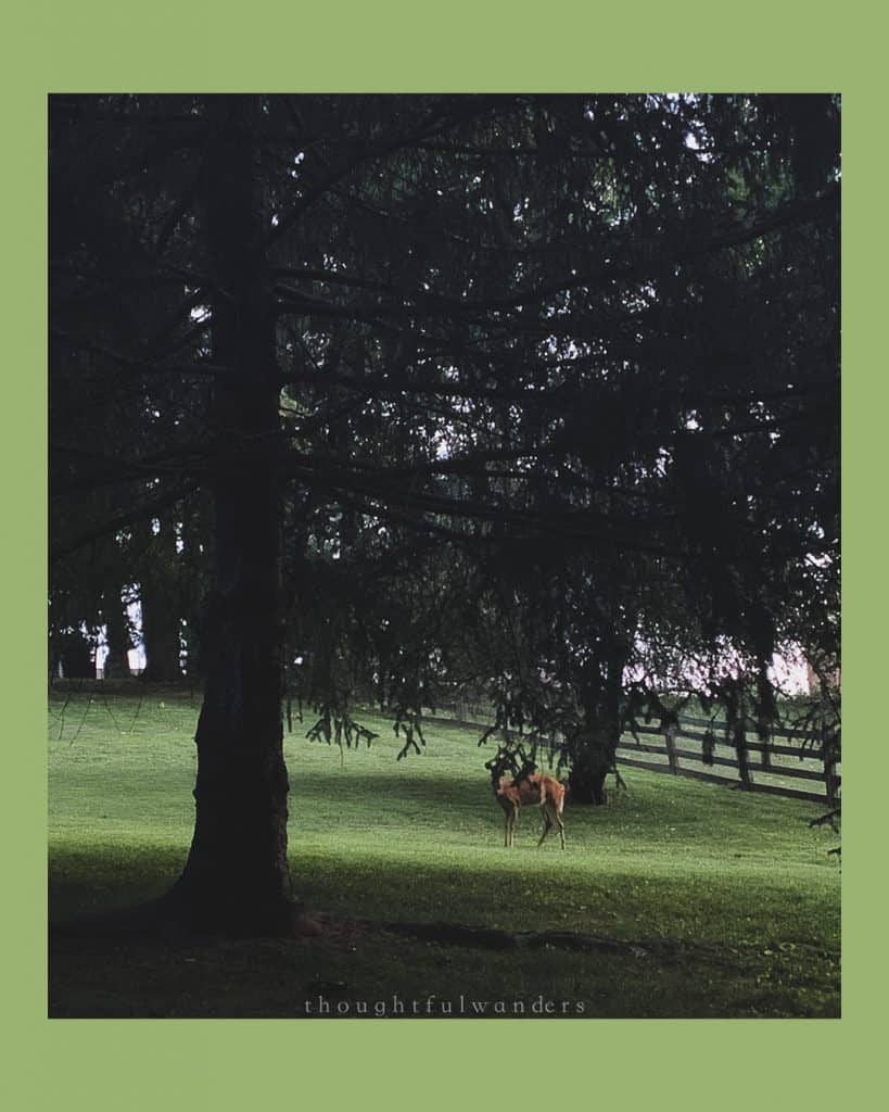 Deer in the distance in a grassy yard behind some towering green trees. photo has green borders.