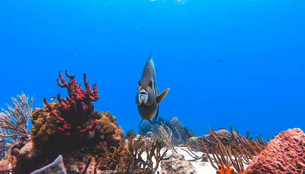 fish cozumel scuba diving