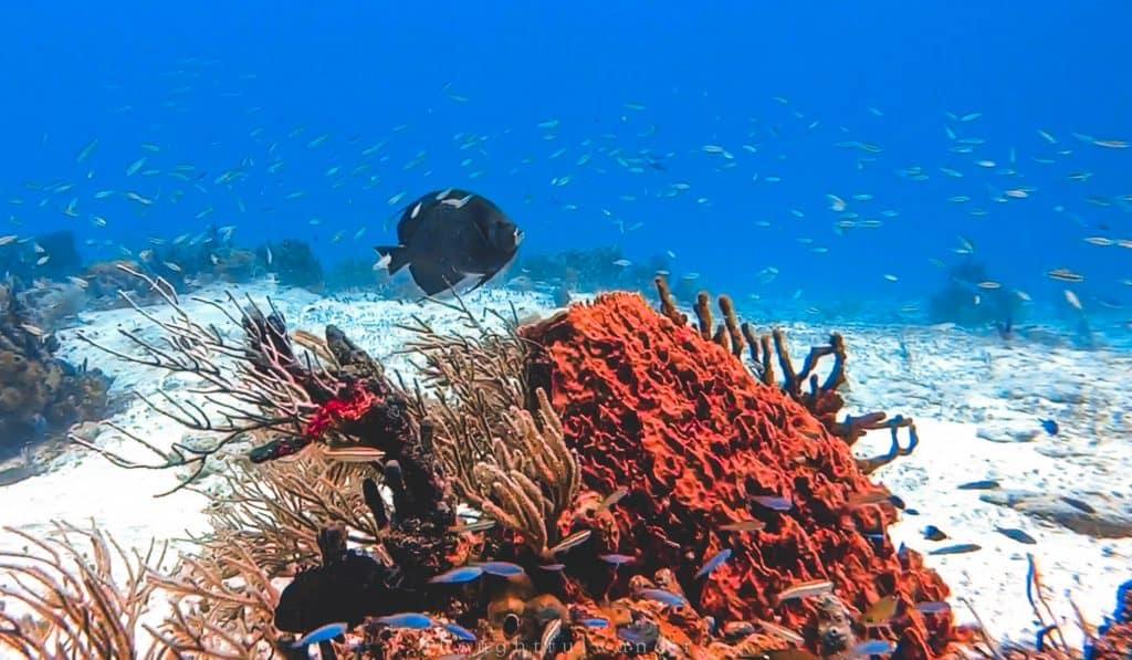 Fish swimming up reef