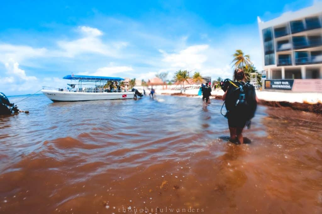 Sargassum seaweed beach at Playa del Carmen